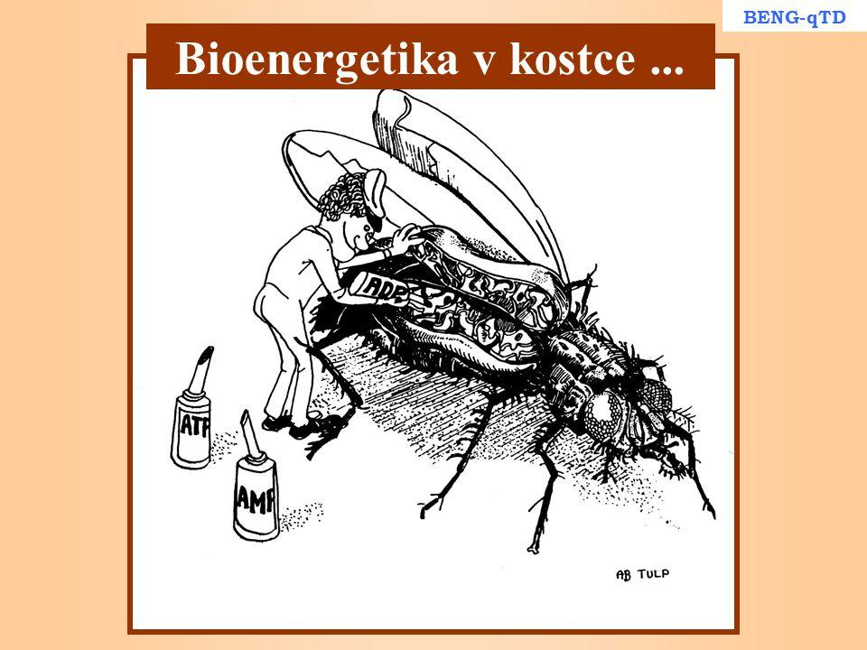 Bioenergetika v kostce ...