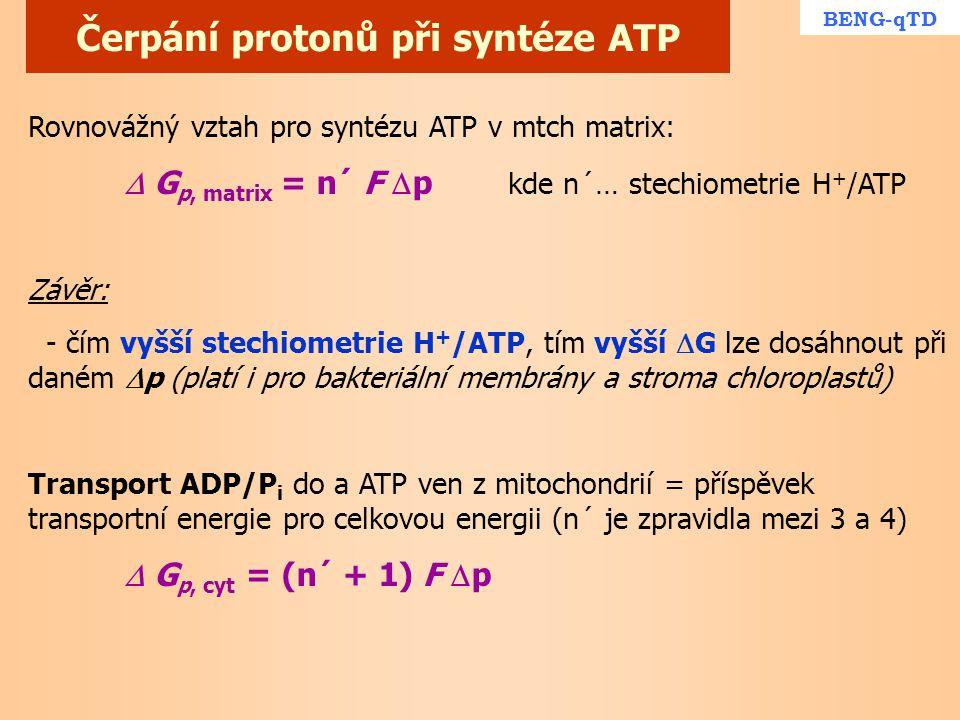 Čerpání protonů při syntéze ATP