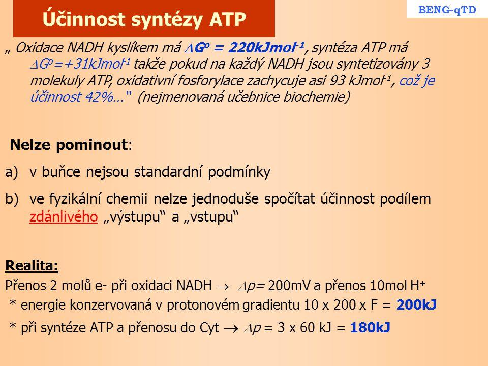 Účinnost syntézy ATP Nelze pominout:
