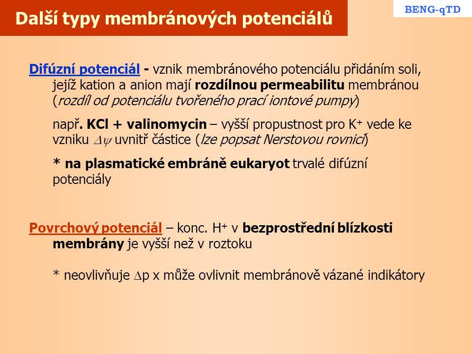 Další typy membránových potenciálů