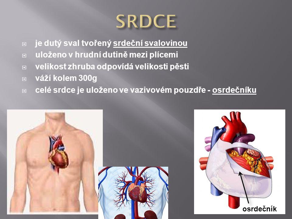 SRDCE je dutý sval tvořený srdeční svalovinou