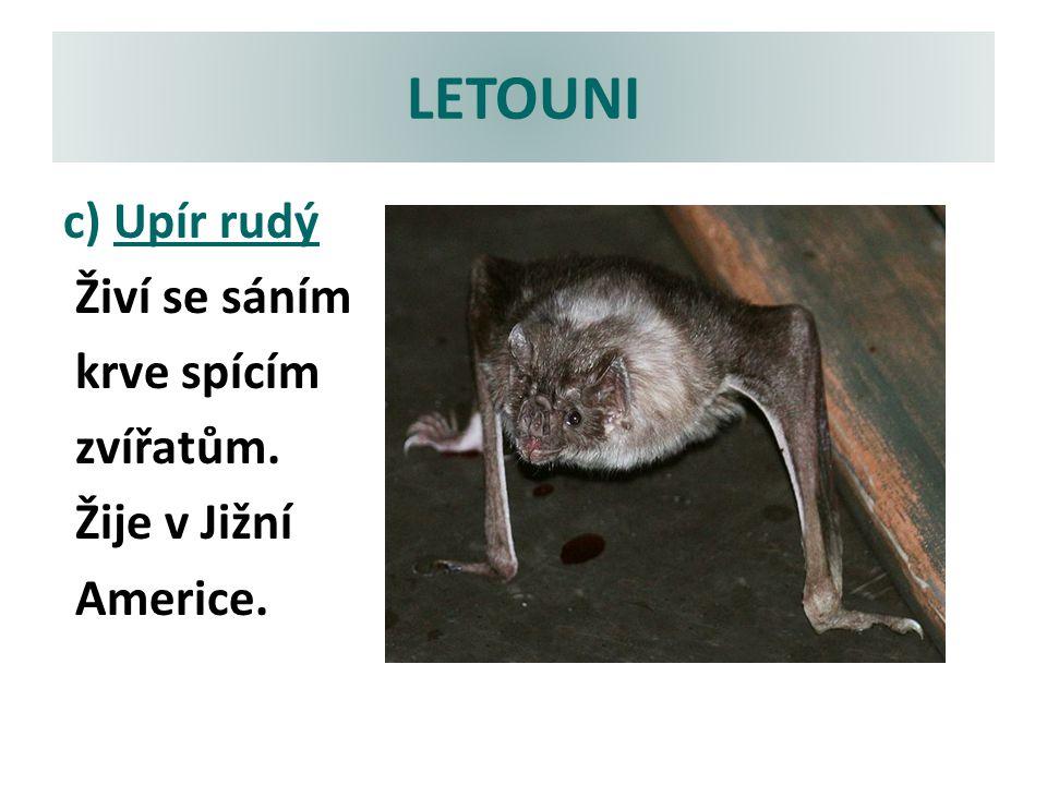 LETOUNI c) Upír rudý Živí se sáním krve spícím zvířatům. Žije v Jižní Americe.