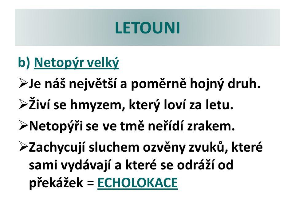 LETOUNI b) Netopýr velký Je náš největší a poměrně hojný druh.