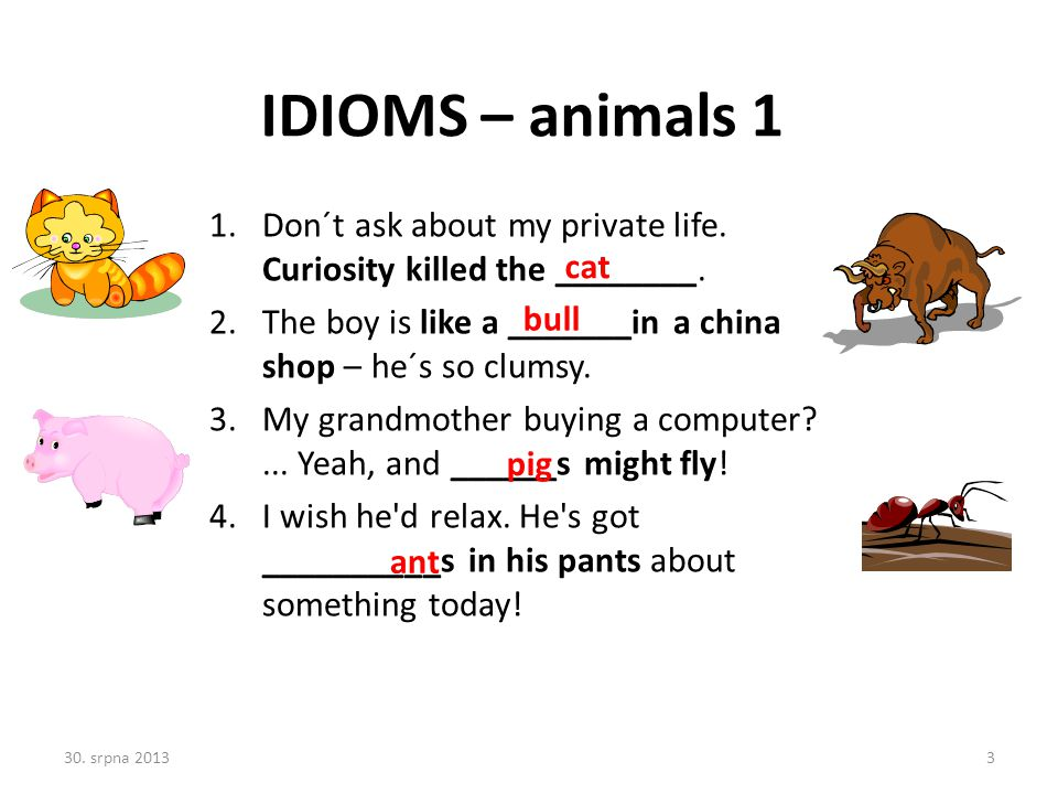 IDIOMS – animals 1 Don´t ask about my private life. Curiosity killed the ________. The boy is like a _______in a china shop – he´s so clumsy.