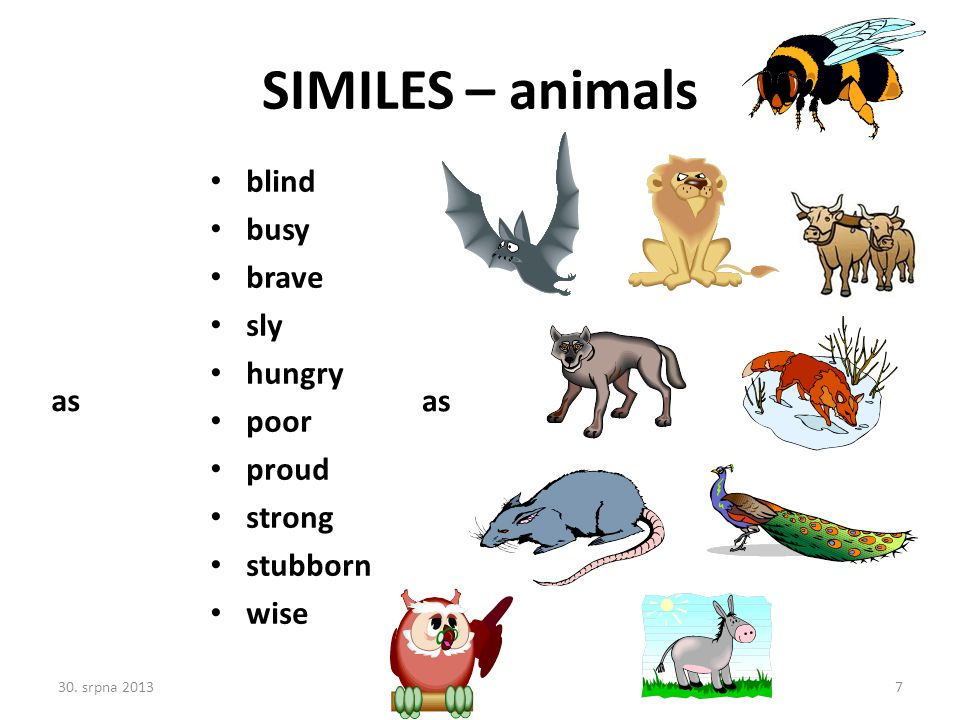SIMILES – animals blind busy brave sly hungry poor proud strong