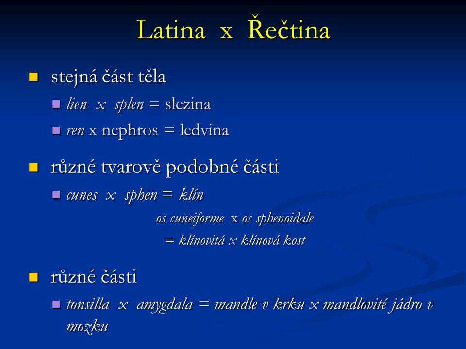 Latina x Řečtina stejná část těla různé tvarově podobné části