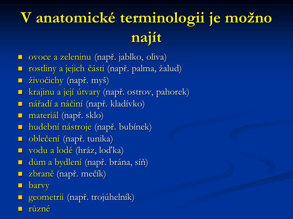 V anatomické terminologii je možno najít