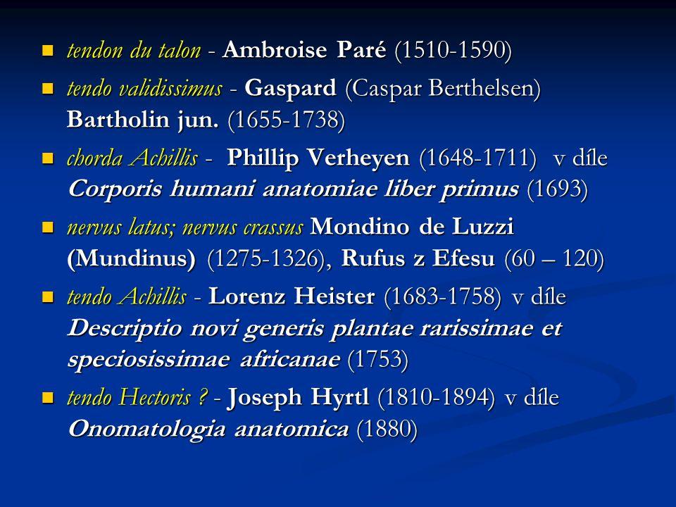 tendon du talon - Ambroise Paré (1510-1590)