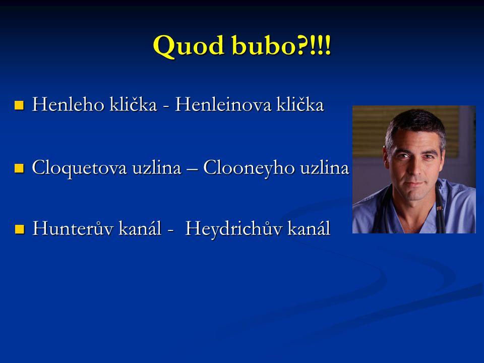 Quod bubo !!! Henleho klička - Henleinova klička