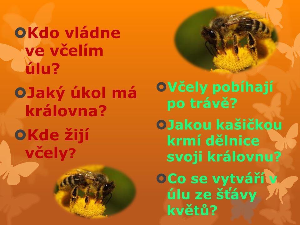 Kdo vládne ve včelím úlu