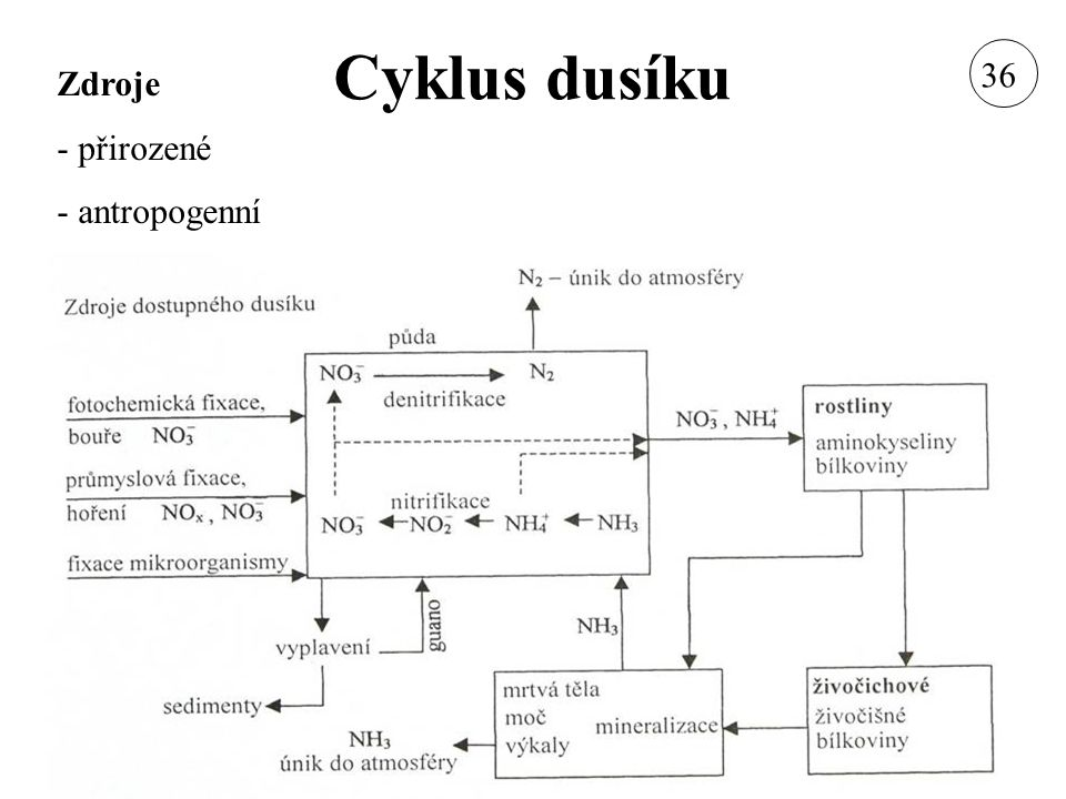 Cyklus dusíku 36 Zdroje - přirozené - antropogenní