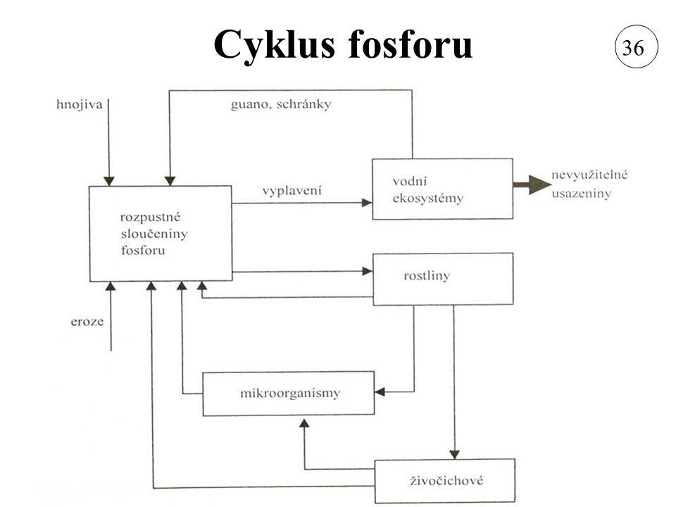 Cyklus fosforu 36