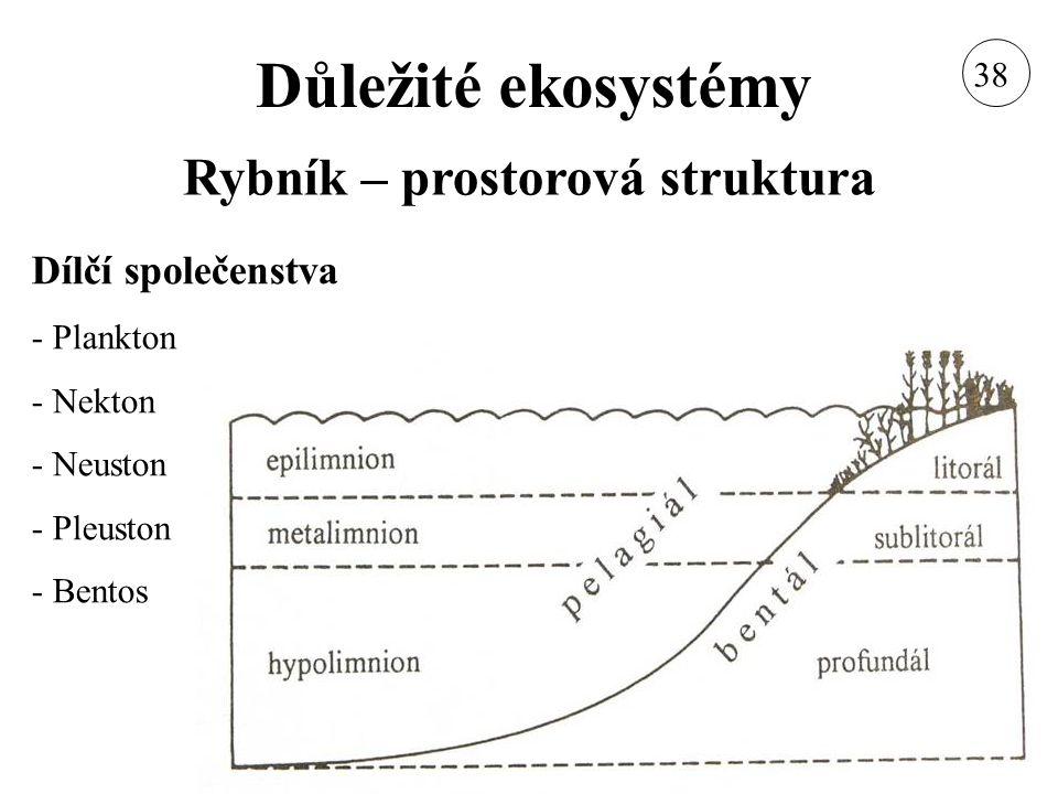 Rybník – prostorová struktura