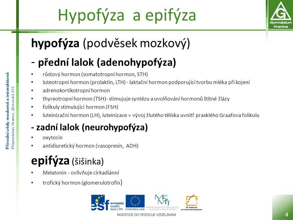 Hypofýza a epifýza hypofýza (podvěsek mozkový)