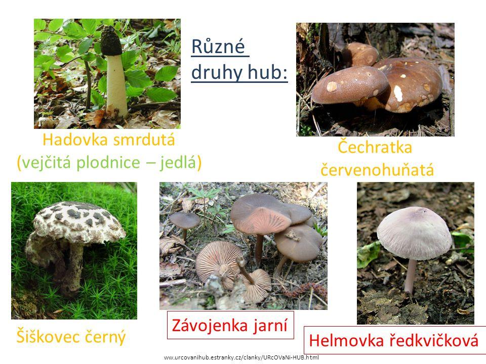 Různé druhy hub: Hadovka smrdutá Čechratka (vejčitá plodnice – jedlá)