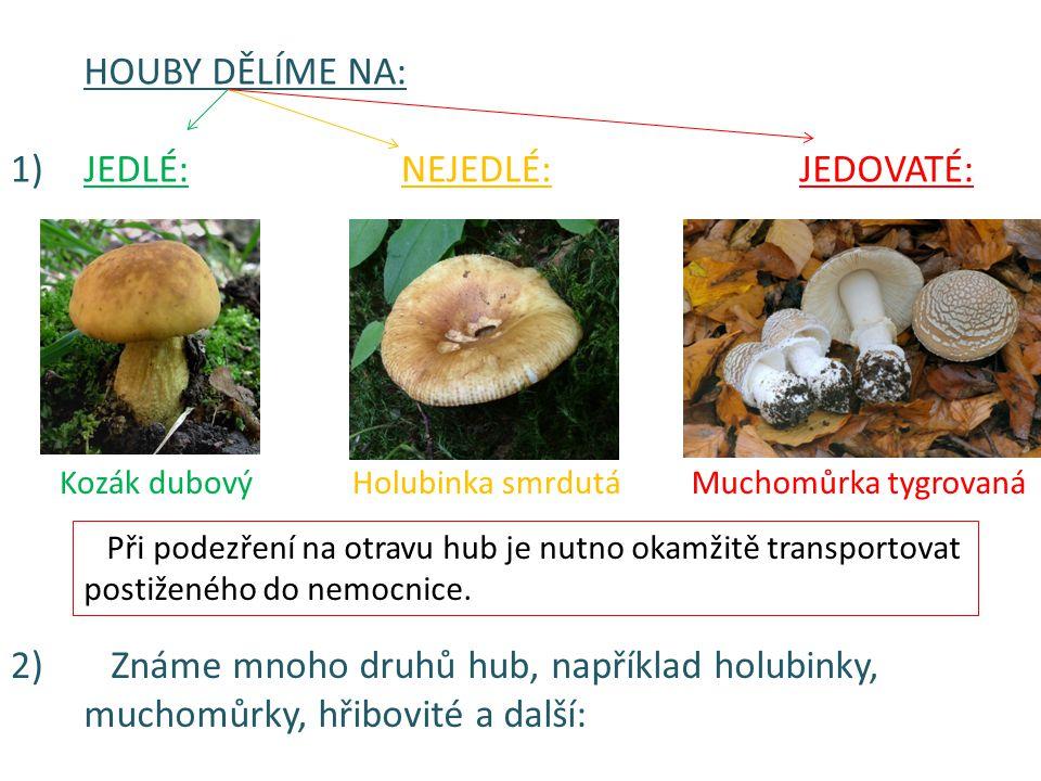 Známe mnoho druhů hub, například holubinky,