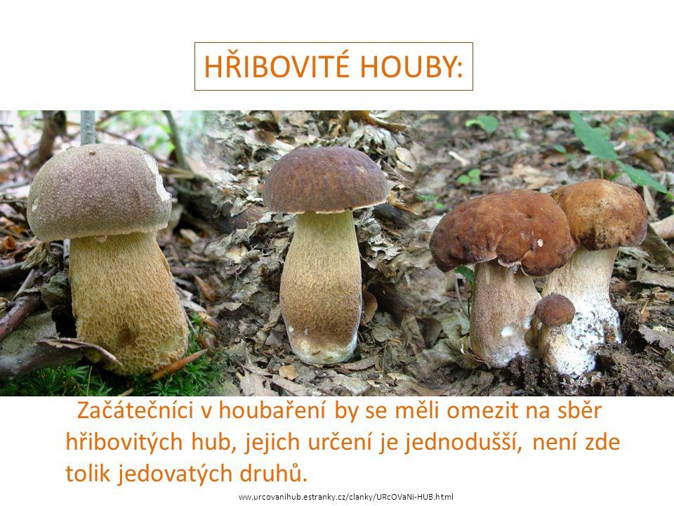 HŘIBOVITÉ HOUBY: Začátečníci v houbaření by se měli omezit na sběr