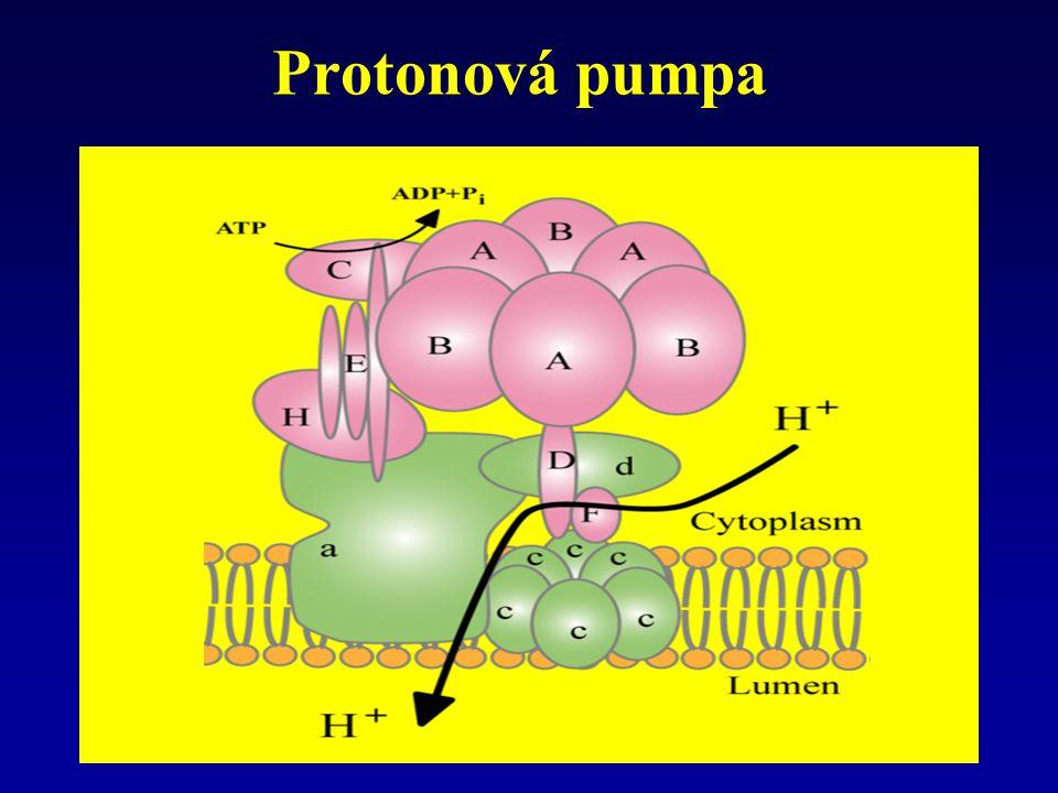 Protonová pumpa