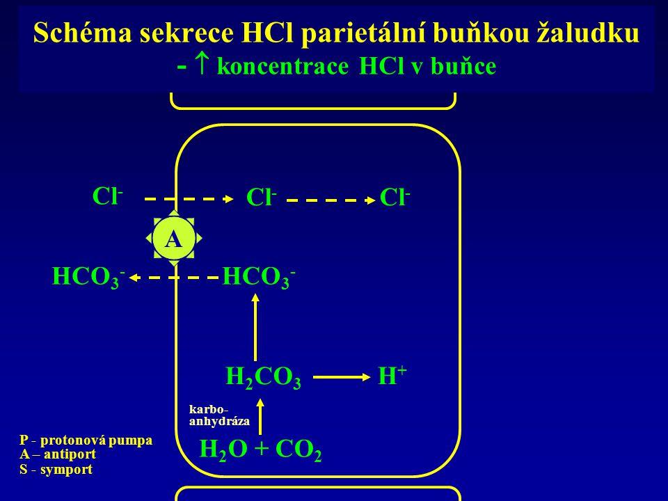 Schéma sekrece HCl parietální buňkou žaludku -  koncentrace HCl v buňce