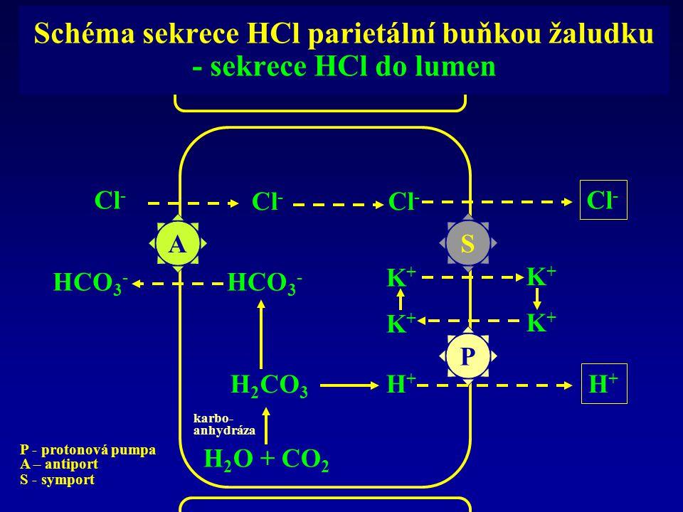 Schéma sekrece HCl parietální buňkou žaludku - sekrece HCl do lumen