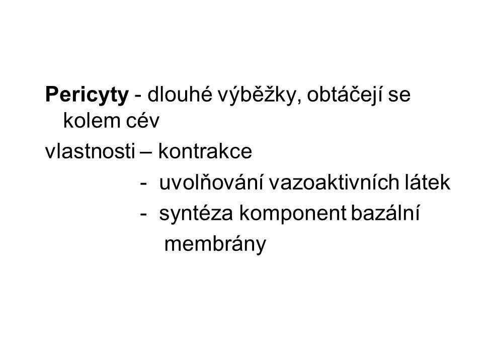 Pericyty - dlouhé výběžky, obtáčejí se kolem cév