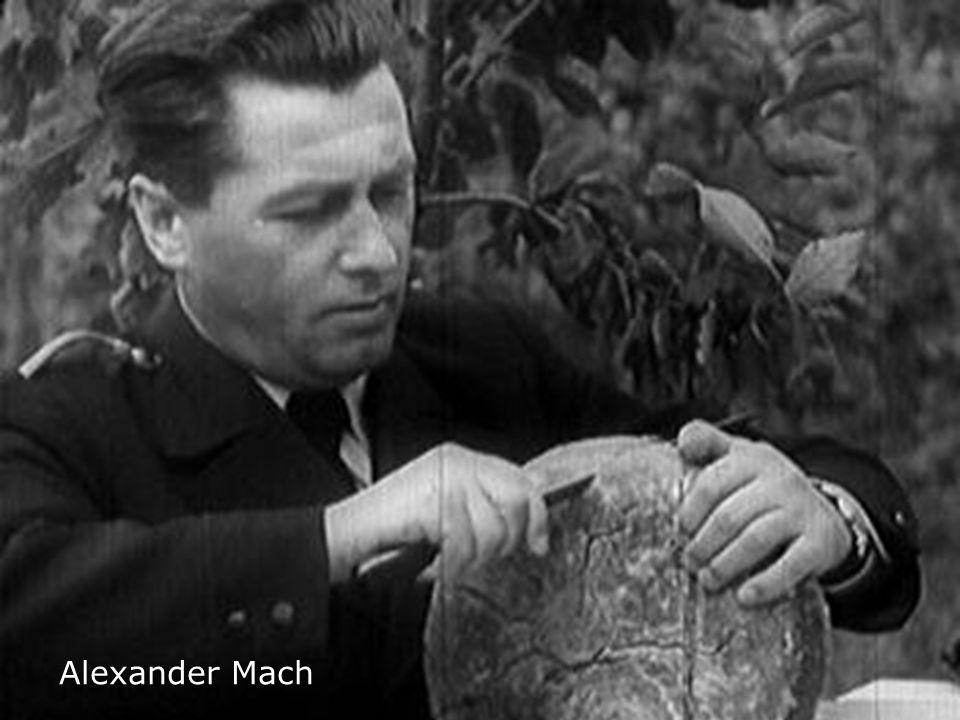 Alexander Mach