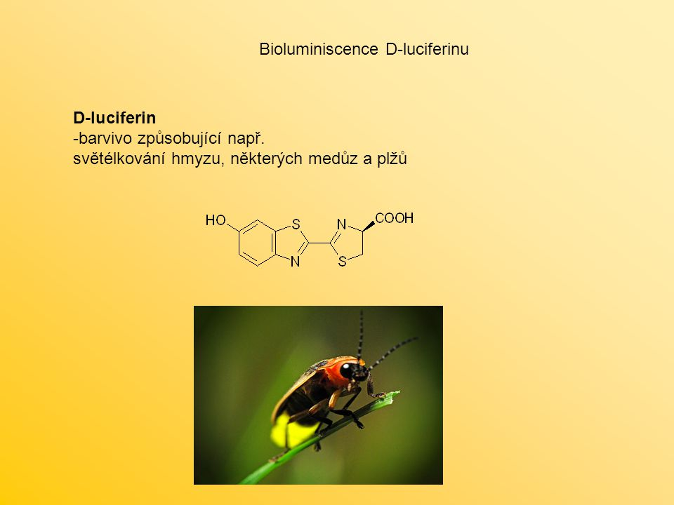 Bioluminiscence D-luciferinu