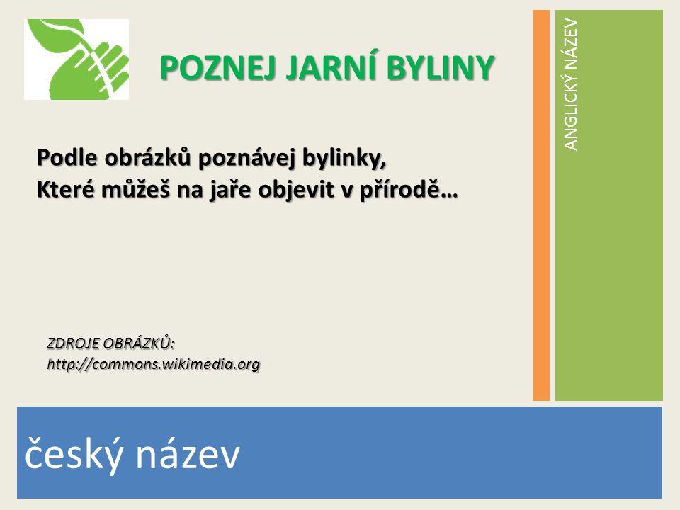 český název POZNEJ JARNÍ BYLINY Podle obrázků poznávej bylinky,