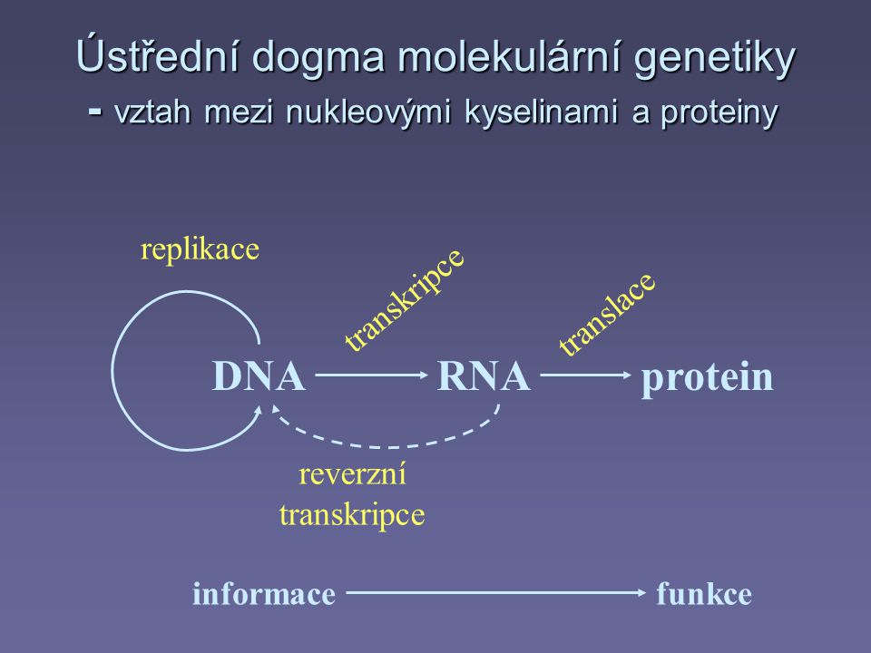 Ústřední dogma molekulární genetiky - vztah mezi nukleovými kyselinami a proteiny