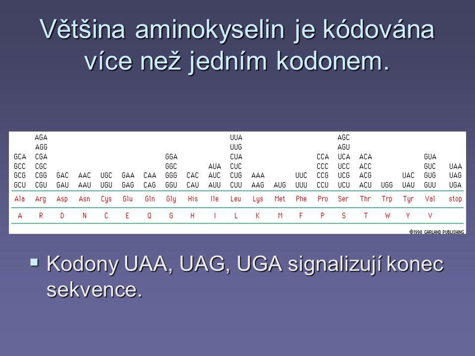 Většina aminokyselin je kódována více než jedním kodonem.