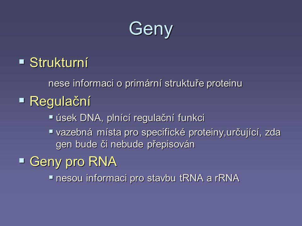 Geny Strukturní nese informaci o primární struktuře proteinu Regulační