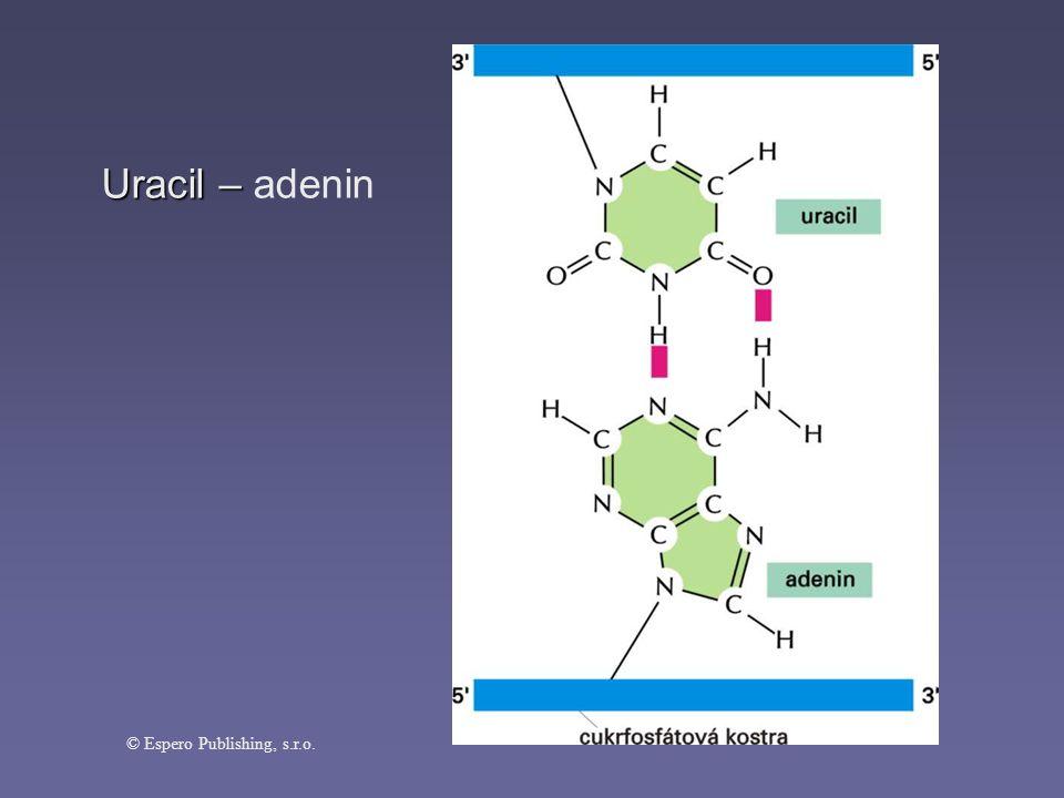 Uracil – adenin © Espero Publishing, s.r.o.