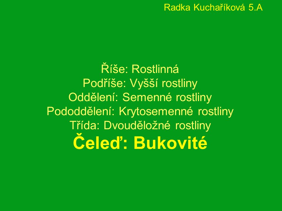 Radka Kuchaříková 5.A
