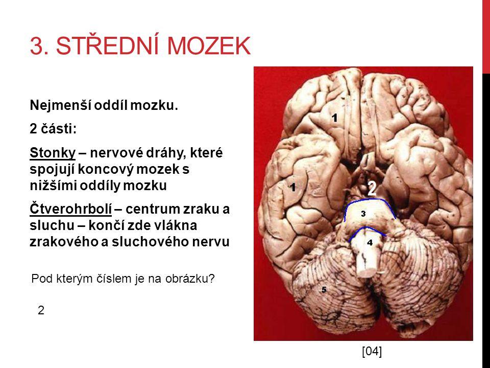 3. Střední mozek