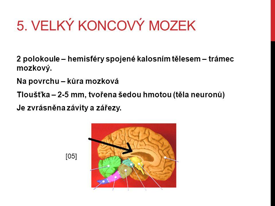 5. Velký koncový mozek
