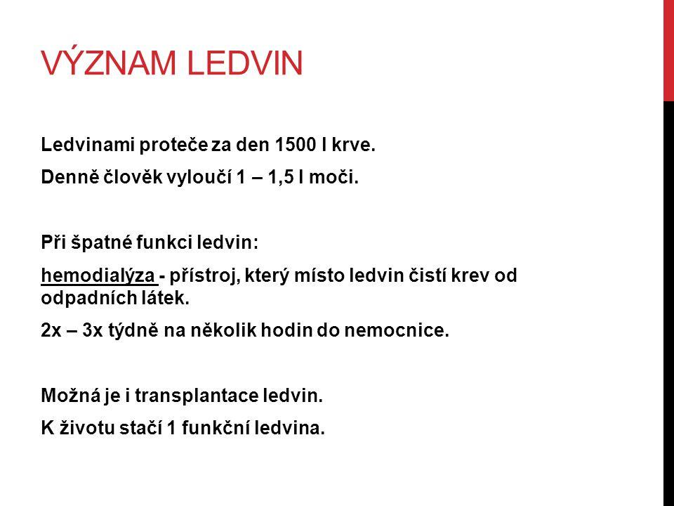 Význam ledvin