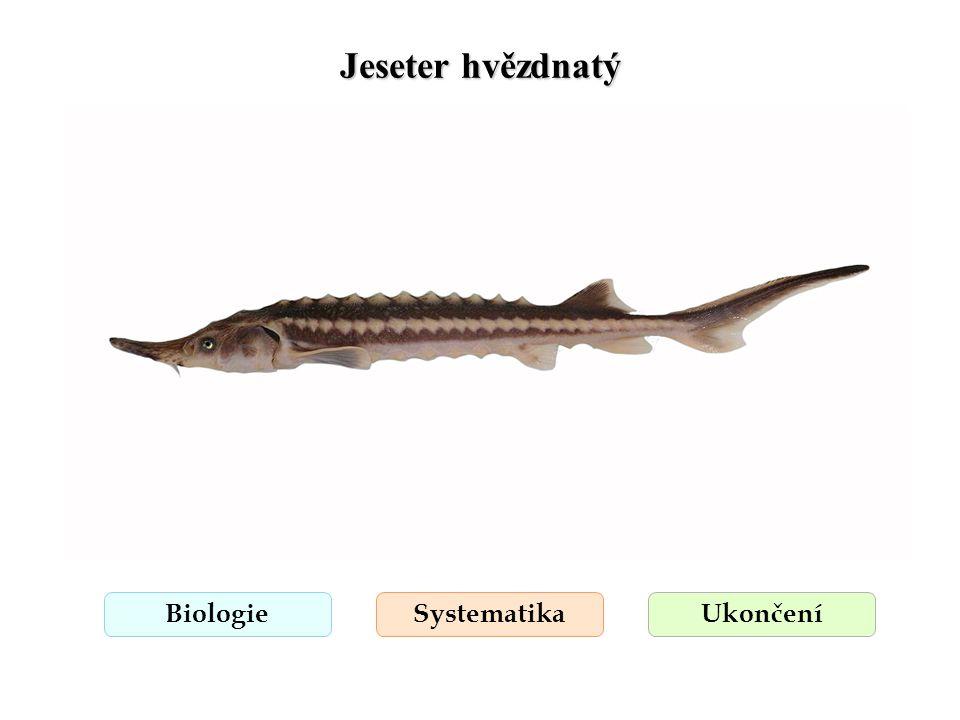 Jeseter hvězdnatý Biologie Systematika Ukončení