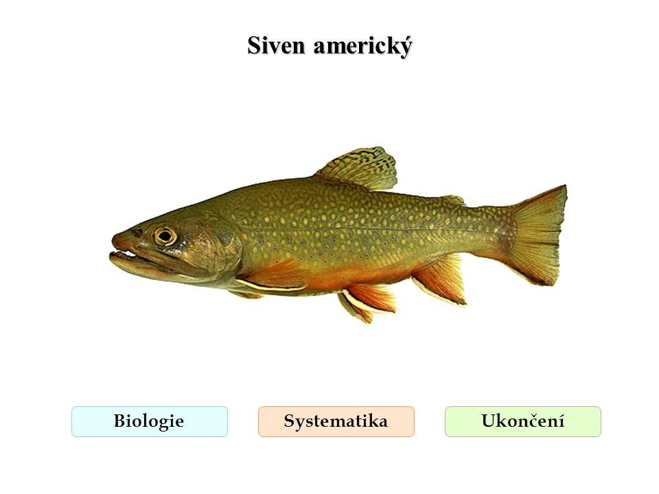 Siven americký Biologie Systematika Ukončení