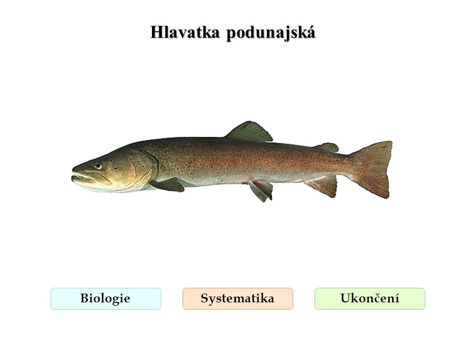 Hlavatka podunajská Biologie Systematika Ukončení