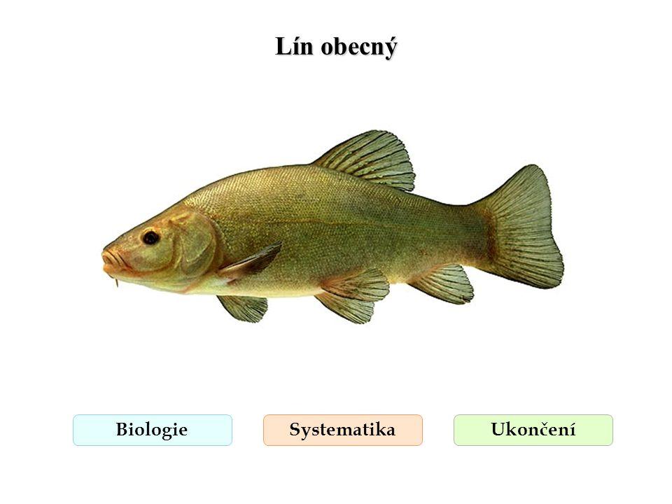 Lín obecný Biologie Systematika Ukončení
