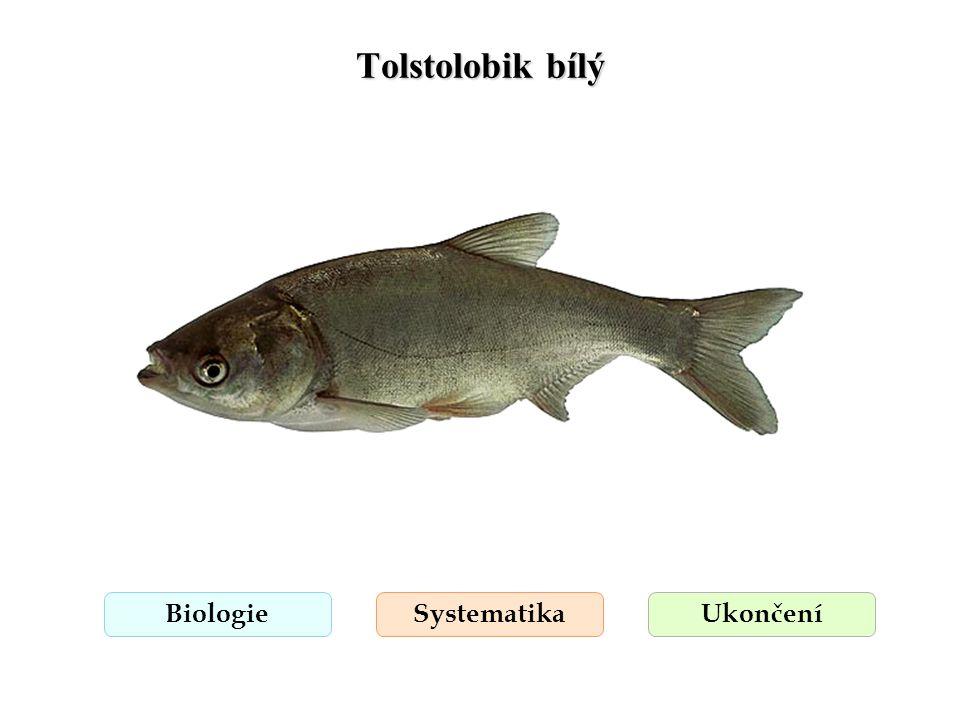 Tolstolobik bílý Biologie Systematika Ukončení