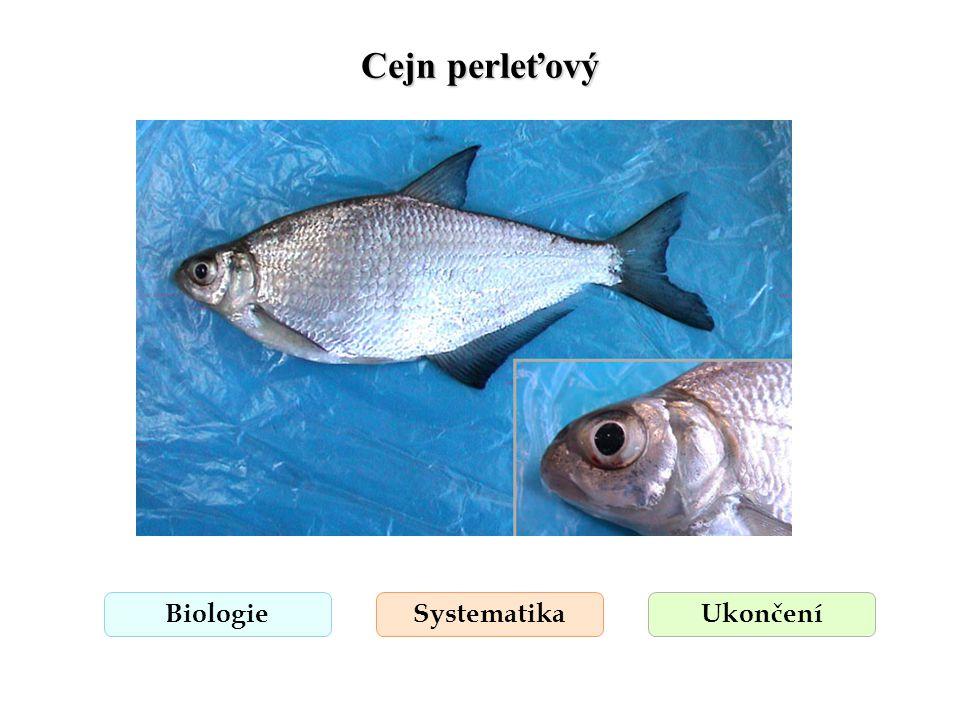 Cejn perleťový Biologie Systematika Ukončení