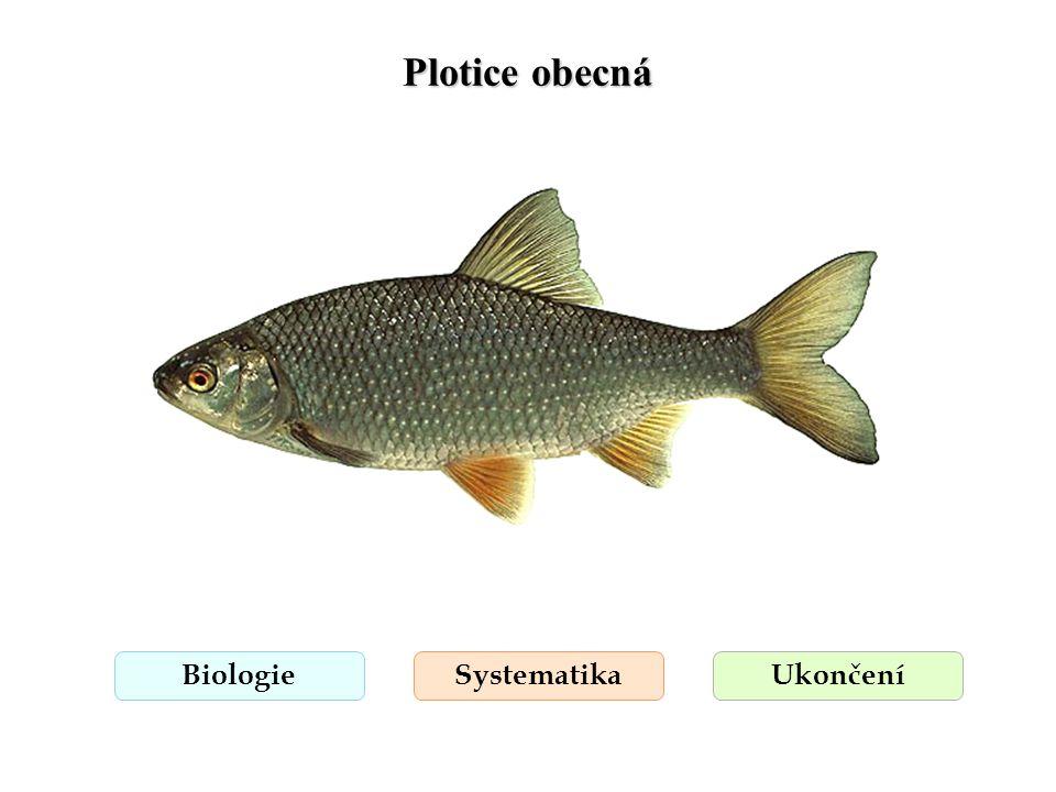 Plotice obecná Biologie Systematika Ukončení
