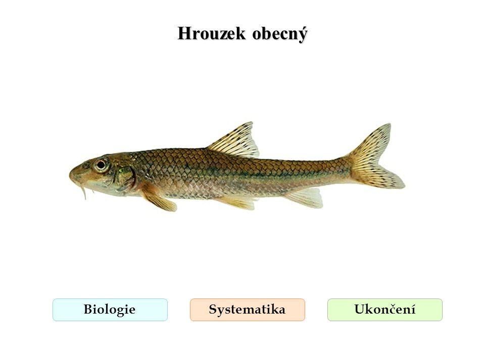 Hrouzek obecný Biologie Systematika Ukončení