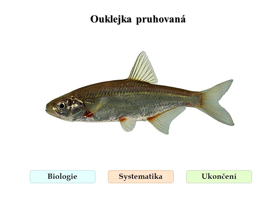 Ouklejka pruhovaná Biologie Systematika Ukončení