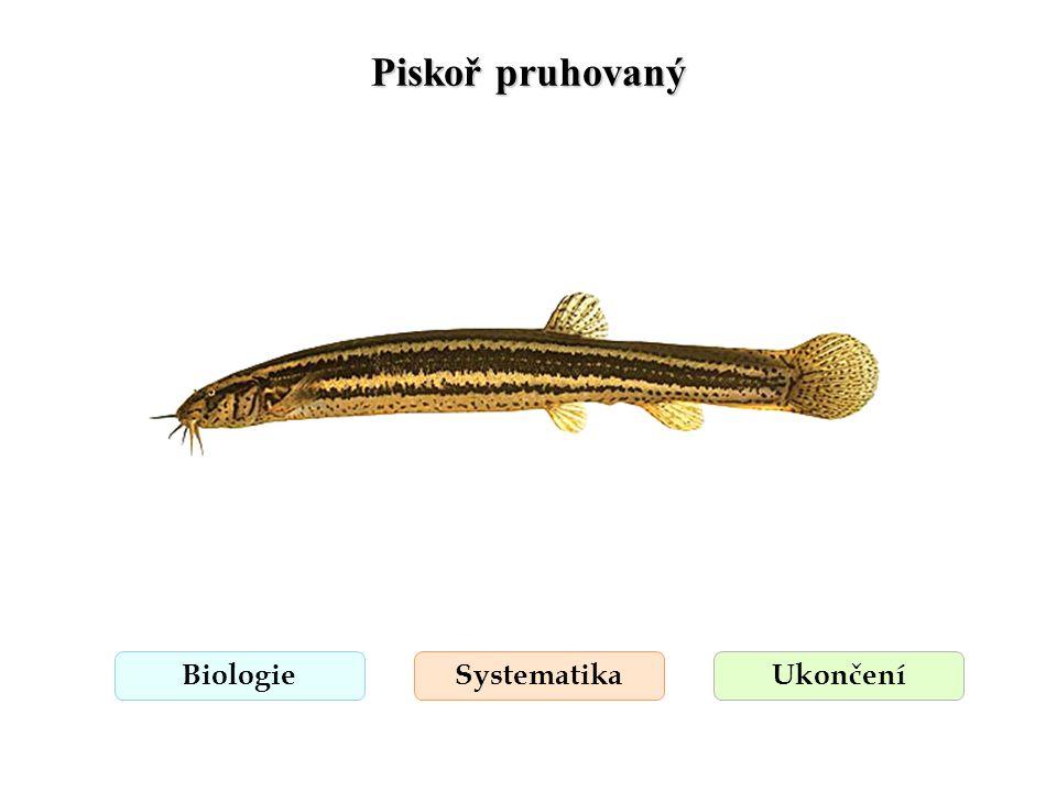 Piskoř pruhovaný Biologie Systematika Ukončení