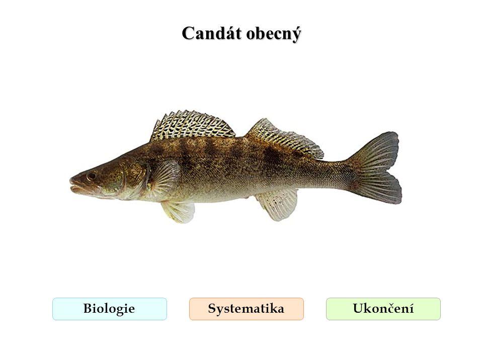 Candát obecný Biologie Systematika Ukončení
