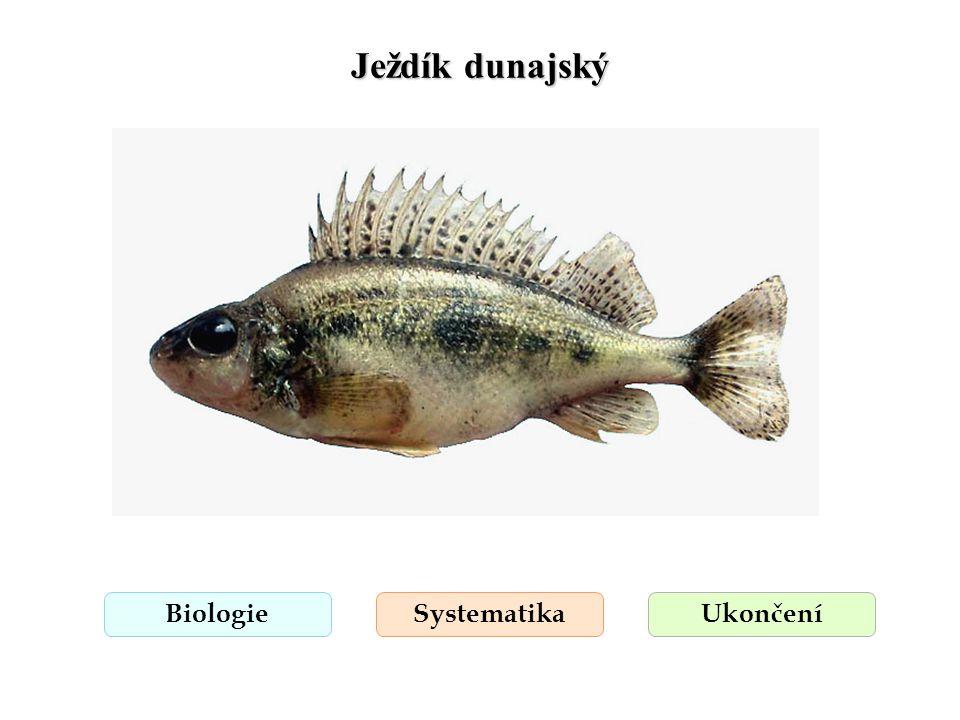 Ježdík dunajský Biologie Systematika Ukončení