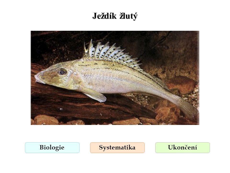 Ježdík žlutý Biologie Systematika Ukončení
