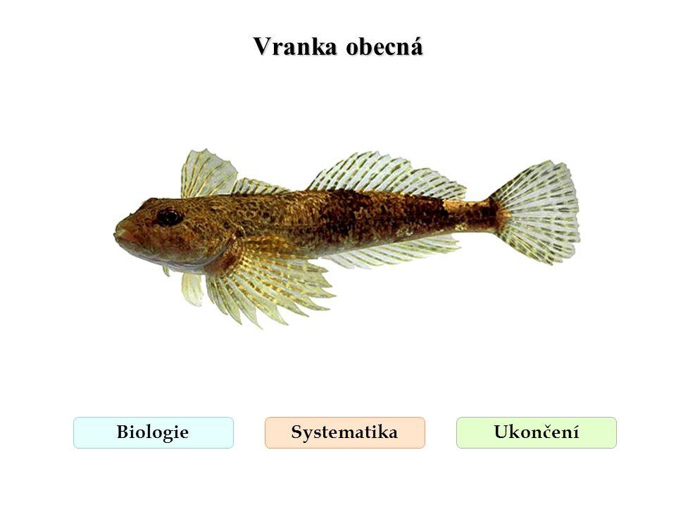 Vranka obecná Biologie Systematika Ukončení